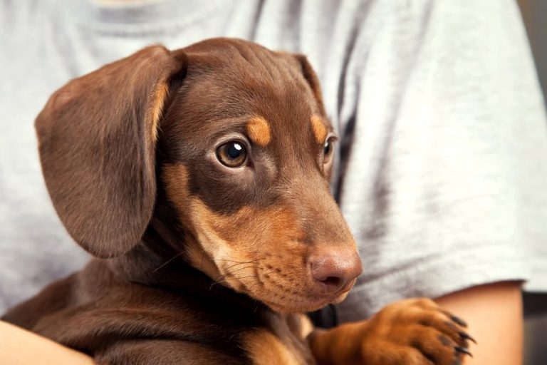 Private Label Dog Supplements to Calm Anxiety