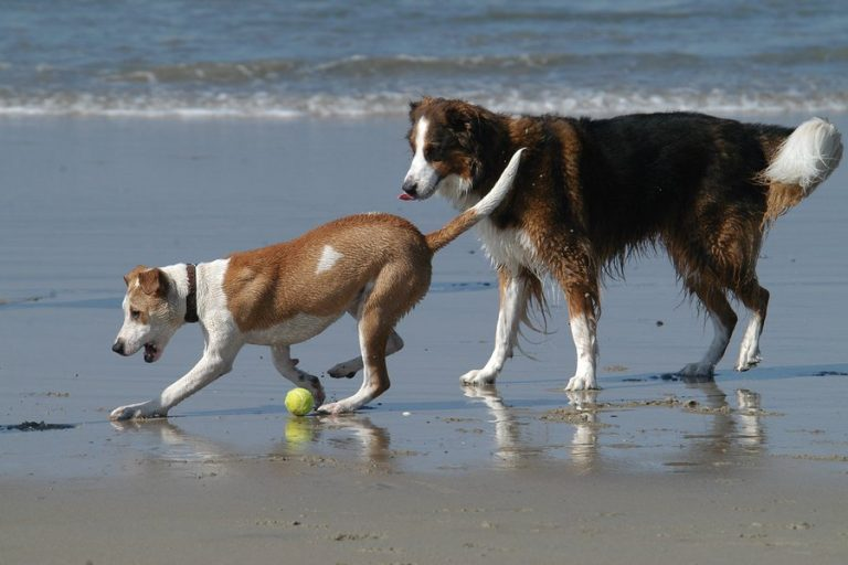 Private Label Hip and Joint Supplements for Dogs