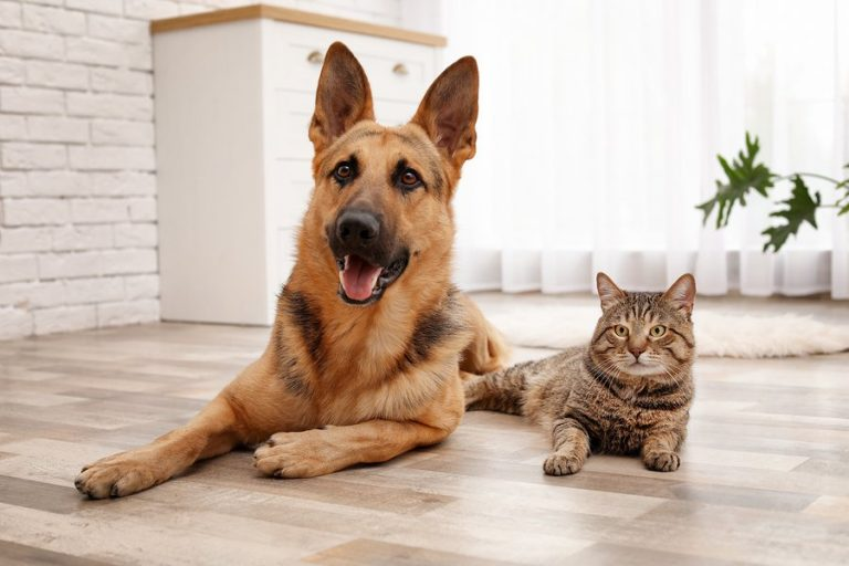 Growing Your Business with Pet Supplements