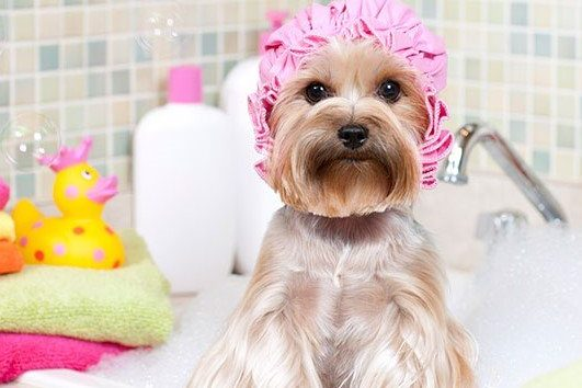 Create Your Own Line of Quality Dog Shampoo