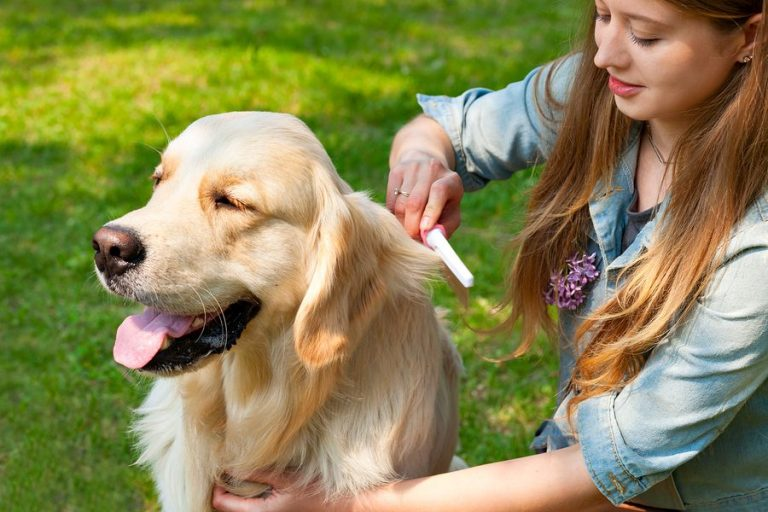 Private Label Skin & Coat Dog Supplements