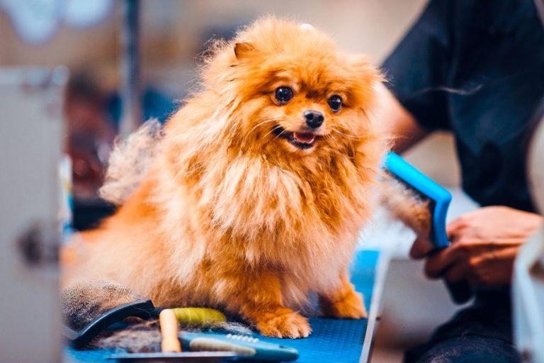 Private Label Dog & Cat Detangling & Dematting Spray