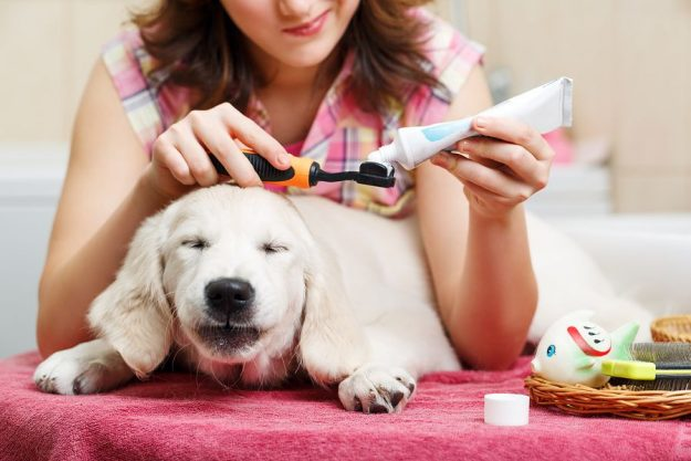 pet mouthwash products information
