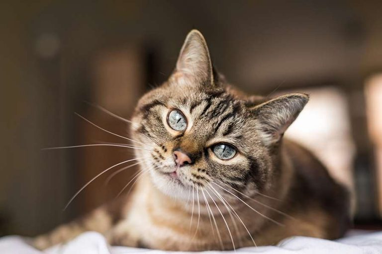 Growing Market for Cat Supplements