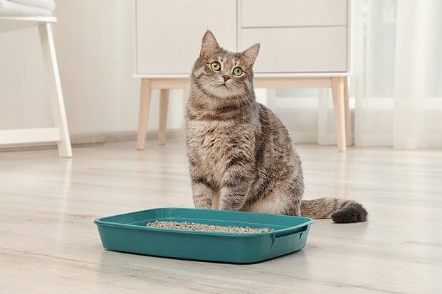 Cat Spray & Feline Urine Odor Remover Product