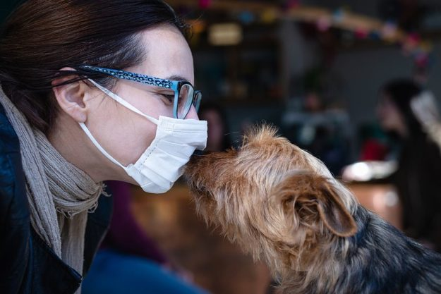 Impact of Coronavirus on the Pet Products Industry