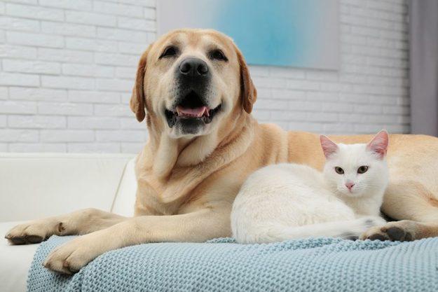Trends in Pet Treats Blog Graphic