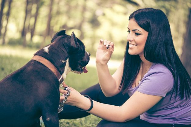7 Pet Treat Trends to Watch in 2021 and Beyond