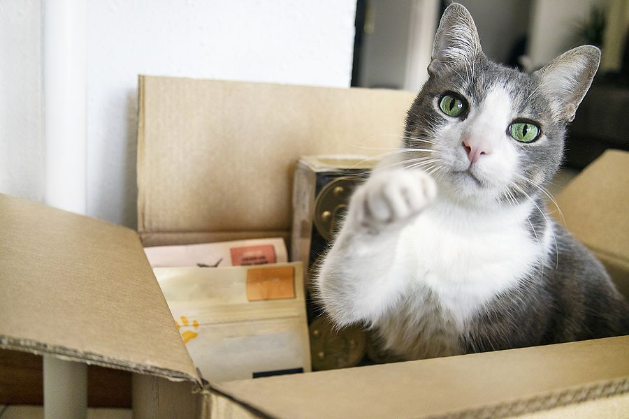 cat sitting in box of private labeled treats