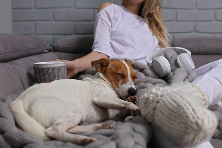 Dog laying next to owner